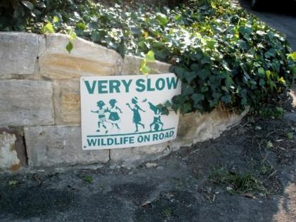 wildlifeonroad